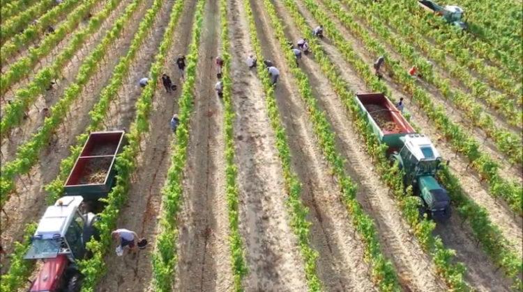 Domaine Terra Noé Ardéche Vignobles